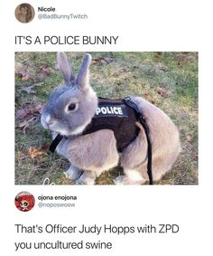 Top Funny Memes About Disney & Disney Memes Zootopia Funny Animal Jokes, Cute Funny Animals, Funny Animal Pictures, Funny Cute, Hilarious Pictures, Top Funny, Funny Videos, Funny Images, Funny Photos