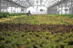 Rooftop farms looking to expand in Queens and Brooklyn