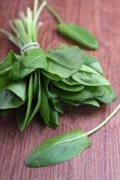 En phytothérapie, les feuilles, les fleurs, les racines et les graines sont utilisées pour la préparation de jus et de tisane. Toutes les parties de l'oseille sont utilisées contre la rétention d'eau. Les graines sont efficaces contre les diarrhées. Et, l'application des feuilles sur une blessure légère peut faire office d'antiseptique grâce à sa teneur élevée en vitamine C.
