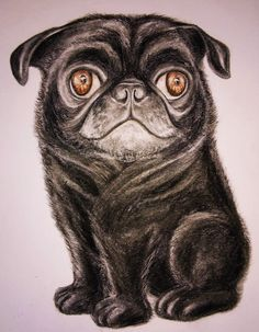 Caricatures, Paintings, Portrait, Pets, Artwork, Pictures, Animals, Style, Photos