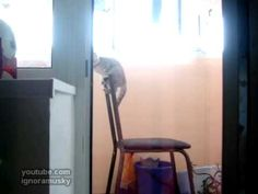 olympic games - high bar gym.   Russian cat working on his routine