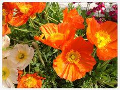 ARCO April 2012 Plants, Eye, Phone, Jewelry, Arch, Jewlery, Jewels, Telephone, Flora