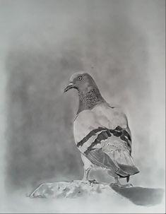 Pigeon, Art For Sale, Original Artwork, Leo, Campaign, Africa, Bird, Medium, Store