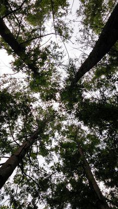 신정산 숲