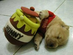 Winne the pooh pup....my baby would look adorable in this!