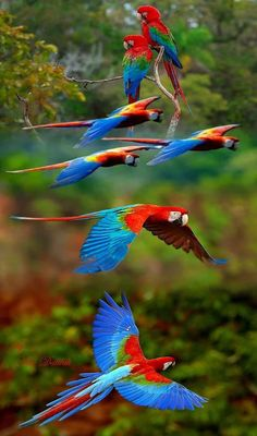 Find and save ideas about Colorful birds, Pretty birds, Beautiful birds and Tropical birds. All Birds, Cute Birds, Pretty Birds, Beautiful Birds, Animals Beautiful, Cute Animals, Beautiful Soul, Tropical Birds, Exotic Birds