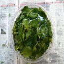 repelente_ortiga Herbs Garden, Medicinal Herbs, Organic Farming, Palak Paneer, Facebook, Vegetables, Ethnic Recipes, Food, Gardens