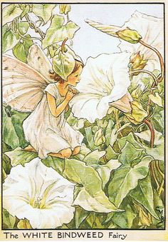 The White Bindweed Fairy (Apró szulák)