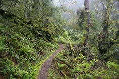Humbug Mountain (Oregon Coast/Port Orford)