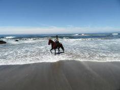 Beach Riding on the Mendocino Getaway Ridethrough Ricochet Ridge Ranch, Fort Bragg, CA