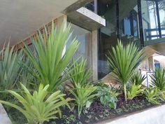 Jardim residencial com bromélias, dracena e formio.