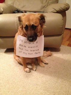 9207105024 relatable post funny dogs, dog shaming y fun Funny Animal Memes, Cute Funny Animals, Dog Memes, Funny Animal Pictures, Funny Cute, Funny Dogs, Funny Memes, Hilarious, Funniest Memes