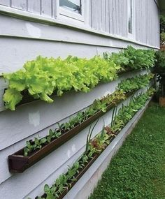 This is my favorite garden idea so far this year. We have two sides of the garage adjoining our raised bed gardens. I am going to make good use of those sunny walls this year!