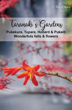 Découvrez les 4 plus beaux jardins de la région du Taranaki : Pukekura, Tupare, Hollard & Pukeiti. Des must-do pendant votre passage dans cette magnifique région de Nouvelle-Zélande.  #Pukekura #Tupare #Hollard #pukeiti #taranakiGarden #parc #pictures #newzealand #NouvelleZelande #mustdo #beautiful #flowers #gardens #northisland #NZ #roadtrip #travel #traveler #van #Waterfalls Rhododendron, Parcs, Fall Flowers, Garden, Beautiful, Potager Garden, Beautiful Gardens, New Zealand, Exotic Flowers