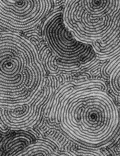 Closeup of Shaved Coral, black and white photo.