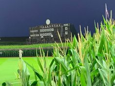 """At the """"Field of Dreams"""" baseball game, Dyersville, Iowa, 2021. Dyersville Iowa, Field Of Dreams, Baseball Games, Fields"""