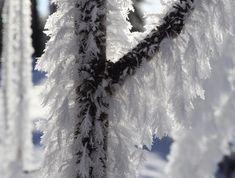 Kuurahöyheniä Frost feathers