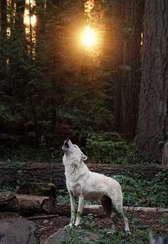 Good morning sunshine!❤️☀️Ready to howl?❤️