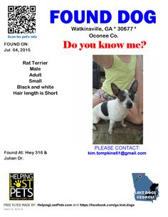 Found Dog - Rat Terrier - Watkinsville, GA, United States