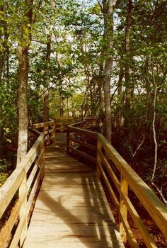 Here Now, 7 of Cape Cod's Best Off-the-Beaten-Path Parks - Outdoors Week 2014 - Curbed Cape Cod