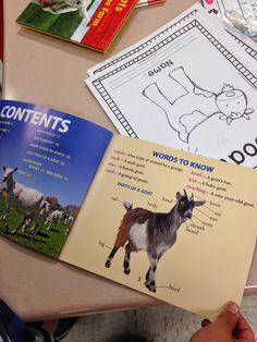 Mrs. Wheeler's First Grade Tidbits: Farm Animal Research