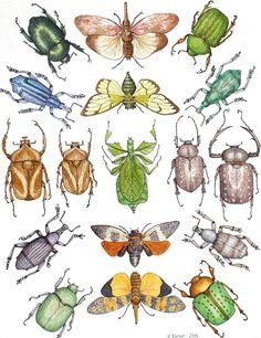 I really love bugs!!! Especially beetles!
