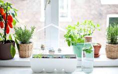 Vensterbanktuin met kruiden, planten en een miniplantenkas