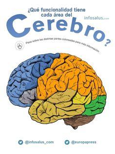 5 curiosidades del cerebro