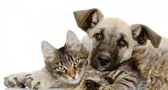 Como demostrarle cariño a tu mascota No hace falta decir que amamos a nuestras mascotas. Les ahogamos con abrazos, palmadas en la cabeza y ellos ocupan un lugar destacado en nuestras de vacaciones en familia. Toque La mayoría de las veces, cuando vemos a nuestros perros, nuestro primer instinto puede …