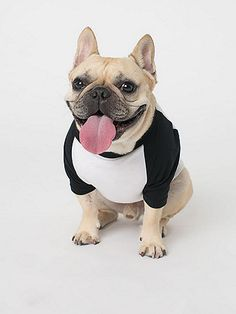 A two-tone raglan for dogs or any four-legged friend in an assortment of colors.