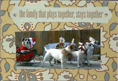 The Pet Postcard Project helps feed homeless dogs and cats, one postcard at a time! Run by Nikki Moustaki, dog trainer, author, and pet expert. Homeless Dogs, Rat Terriers, Pictures Images, Pinterest Board, Christmas Humor, Rats, Reindeer, Dog Breeds, Pepper