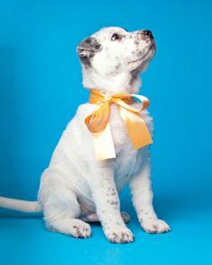 Puppies! | Modern Dog magazine