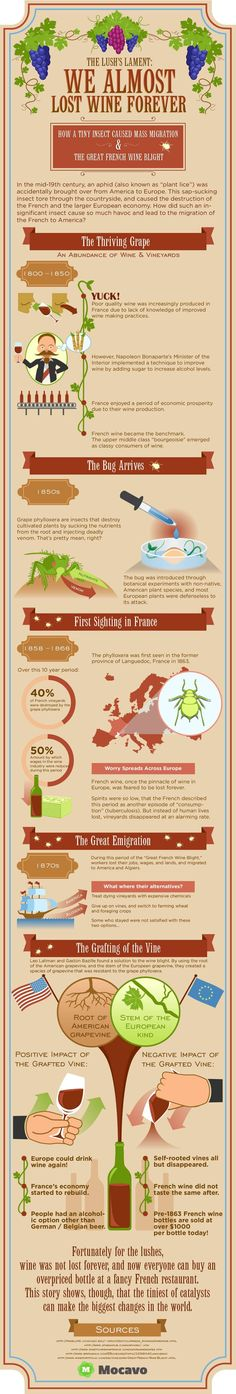 How a single bug almost destroyed wine forever [Infographic] It was saved by Missouri wines!  #mowines