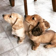 When there are treats involved we are #allears #puppytraining #puppy #smartypants