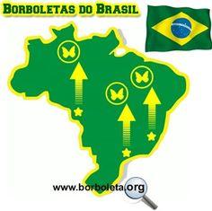 Tudo sobre Borboletas Brasileiras   Tudo Sobre Borboletas