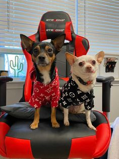 It's time to design the gaming chair for them. 😎 Cool Chairs, Gaming Chair, Dog Love, Really Cool Stuff, Racing, Dogs, Red, Design, Running