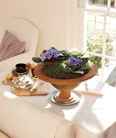 You'd never guess these violets came from the supermarket. Covering the soil in moss gives potted plants an instant upgrade.