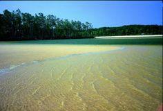 Ilha de #Marajó (#Pará) www.italianobrasileiro.com