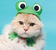 Кот лягушка лол