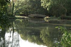 View of the bridge at Cannop Pond - Forest of Dean. October 2013