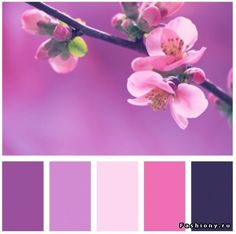 A monochrome lilac color palette contains all shades - Combination with purple color ...