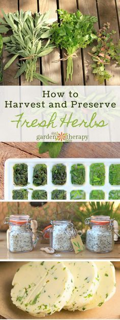 How to Harvest and Prepare Fresh HerbsYou can find Harvesting herbs and more on our website.How to Harvest and Prepare Fresh Herbs Healing Herbs, Medicinal Herbs, Aromatic Herbs, Organic Gardening, Gardening Tips, Vegetable Gardening, Flower Gardening, Indoor Gardening, Preserve Fresh Herbs