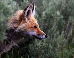 ":: I'm the motherfucking fox,"" Takumi whispered, both to himself and to me. ""No one catch the fox. ~ John Green, Looking for Alaska"