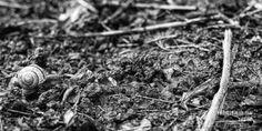 DAG 80: ADAM THE SNAIL Project 4.12.365 #photography #fotografie #zeeuw #zeeland #snail