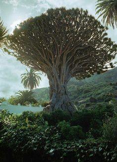 (5) Forest Freak