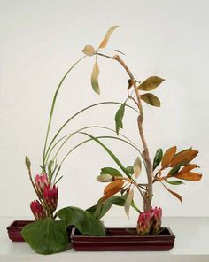 Magnolia branches ikebana in two holders