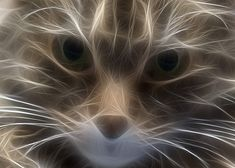 Fractalized cat pic