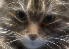 フラクタル猫-02