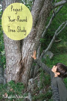 Great for Nature Kids: Year-Round Tree Study {from @mudtometeors}