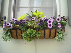 Covesia.com - Tahukah anda? Masih banyak yang belum menyadari bahwa ternyata beberapa tanaman hias selain berfungsi memperindah lingkungan rumah, juga memiliki...